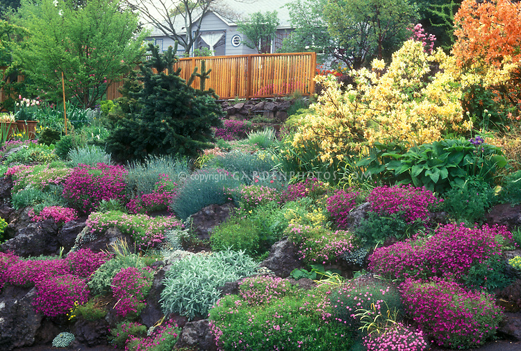 Gorgeous garden in spring flowers, with rhododendron, azalea bushes, evergreens, bulbs, rock garden plants perennials, slope, house and home landscaping with fence