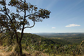 Aguas Lindas, Goias, Brazil. View over cerrados countryside with tree.