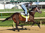 April 23, 2014 Vicar's In Trouble, ridden by exercise rider Joel Barrientos, gallops at Churchill Downs.  He is owned by Ken and Sarah Ramsey, trained by Michael Maker, and recently won the Louisiana Derby.