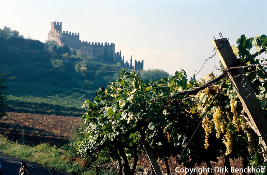 Soave, Weinanbau,  Venetien, Italien.