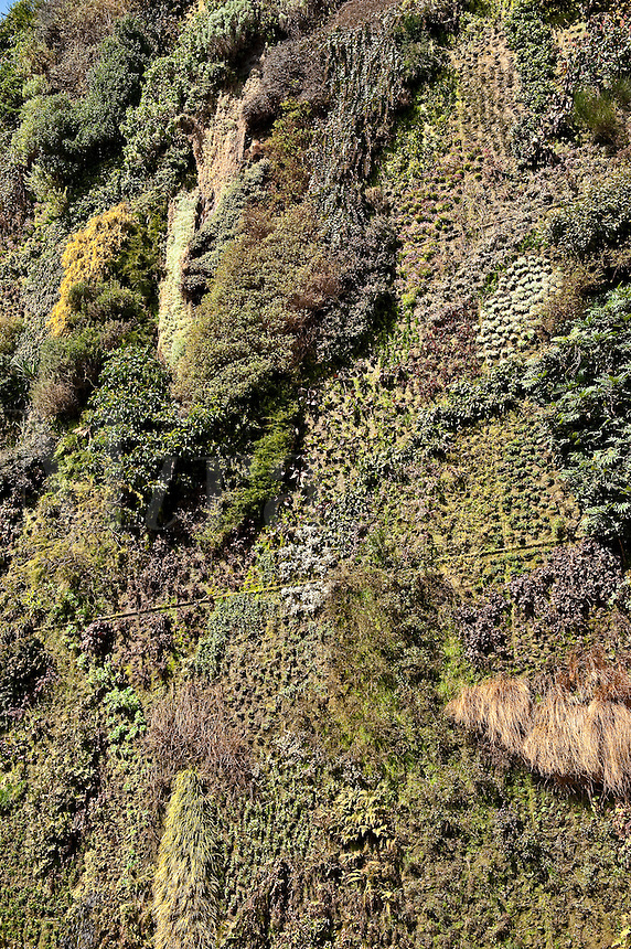 Living wall at the Caixa Forum, Madrid, Spain
