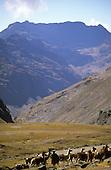 Altiplano, Peru. Llamas and small girl; mountains behind.