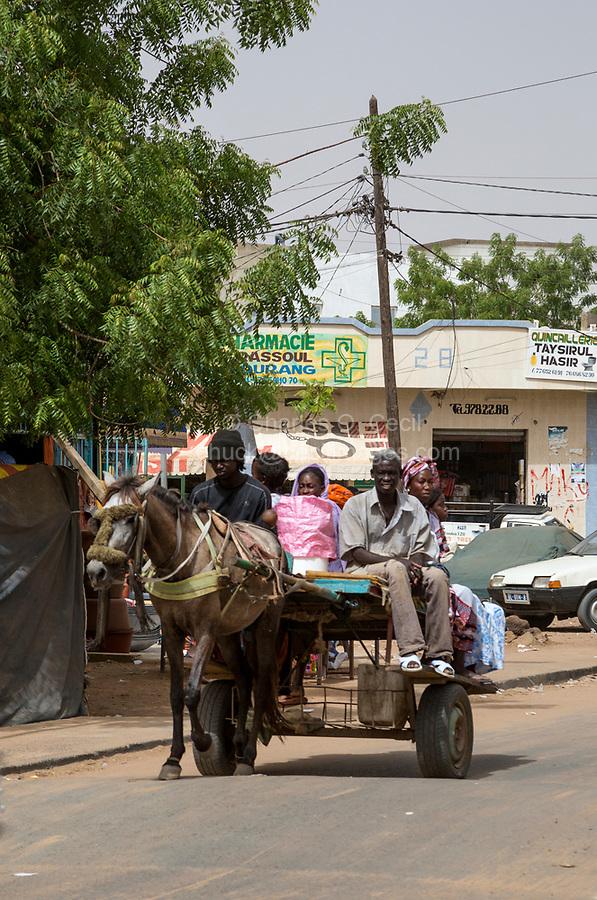 Senegal, Touba.  Horse-drawn Local Transport.