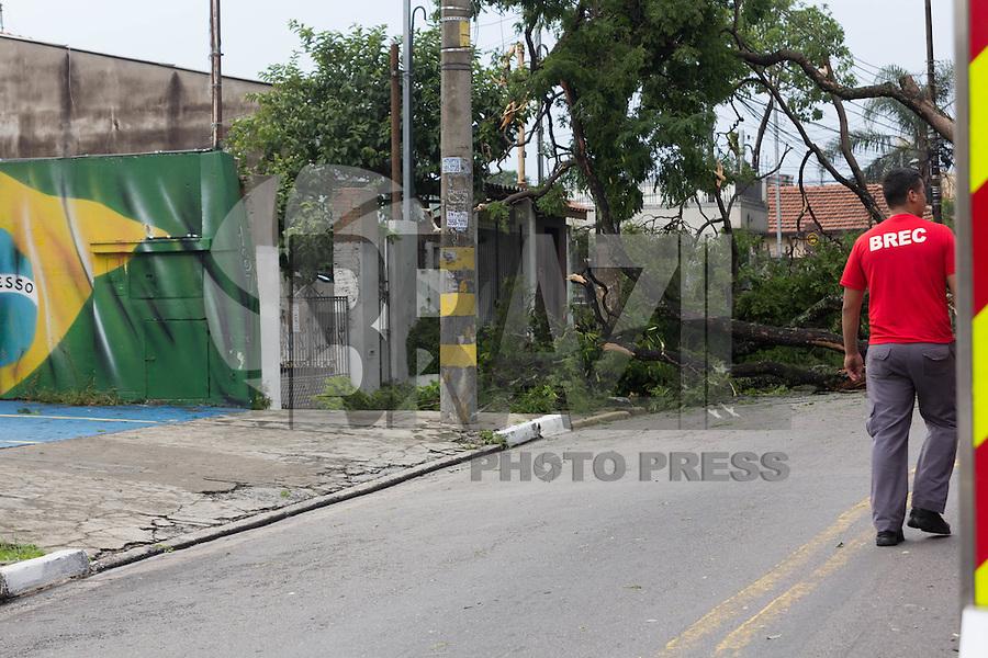 SÃO PAULO,SP, 18.12.2016 - CHUVA-SP - Chuva forte causa queda de árvore na Rua Santa Eudóxia, próximo a Av.Casa Verde no bairro da Casa Verde, região norte de São Paulo na tarde deste domingo (18). ( Foto : Darcio Nunciatelli / Brazil Photo Press)