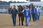 HOT SPRINGS, AR - February 18: Terra Promessa #2 walks over for the Bayakoa Stakes at Oaklawn Park on February 18, 2017 in Hot Springs, AR. (Photo by Ciara Bowen/Eclipse Sportswire/Getty Images)