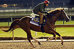 October 30, 2018 : Catalina Cruiser at Churchill Downs on October 30, 2018  in Louisville, Kentucky in preparation for the Breeders' Cup Dirt Mile. Mary M. Meek/ESW/CSM