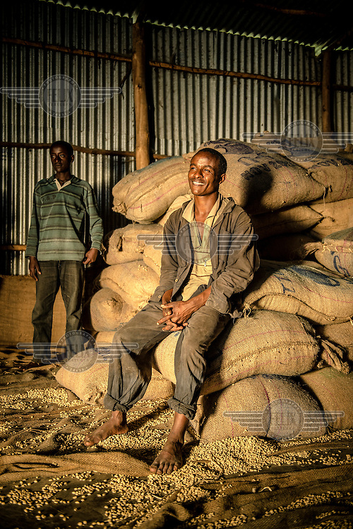 A labourer sits on sacks of coffee beans in the Teppi Plantation. It is one of country's largest plantations and where Starbucks buys much of its Ethiopian coffee. /Felix Features