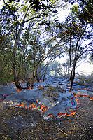 Lava flow at Gary's, Gary Sleik's house, Lava flow in the trees, Near Hawaii, USA Volcanoes National Park, Kalapana, Hawaii, USA, The Big Island of Hawaii, USA