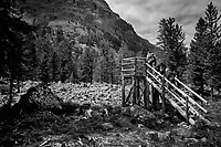 Switzerland. Canton Graubünden. Val Roseg. A group of hikers climbs stairs on a wooden tower to have a look at the panorama. The Val Roseg is a valley of the Swiss Alps, located on the north side of the Bernina Range in the canton of Graubünden (Engadin). The valley is drained by the Ova da Roseg, a tributary of the Flaz (Inn basin), at Pontresina. 20.06.2020 © 2020 Didier Ruef
