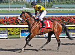 06 February 2010:  Montana Night with jockey Ramon Dominguez in the Fifth race at Gulfstream Park in Hallandale Beach, FL.