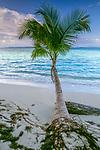 Palm, Bocas del Toro Archipelago, Panama <br /> <br /> Canon EOS-1N, EF lens, Fujichrome Velvia film
