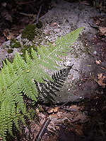 Close up on fern and it's shadow on rock<br />
