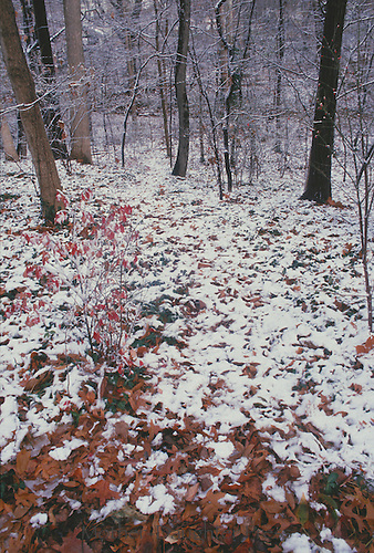 Woodland path in winter, pathway through backyard forest in winter with snow