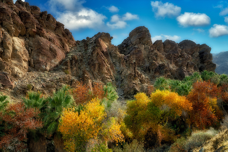 Fall colored cottonwood trees in Andreas Canyon. Palm Springs, California