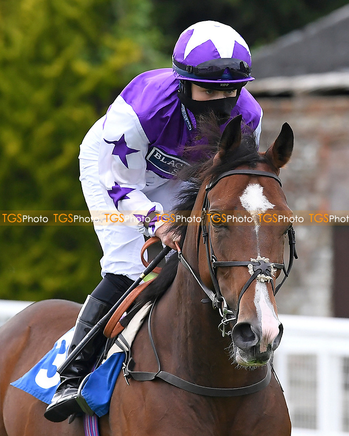 Good Earth ridden by Safe Osborne goes down to the start  of The Venture Security Handicap Stakes  during Horse Racing at Salisbury Racecourse on 11th September 2020