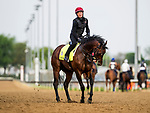 LOUISVILLE, KY - MAY 03: Mendelssohn with  Dean Gallagher on track preparing for the Kentucky Derby at Churchill Downs on May 3, 2018 in Louisville, Kentucky. (Photo by Alex Evers/Eclipse Sportswire/Getty Images)