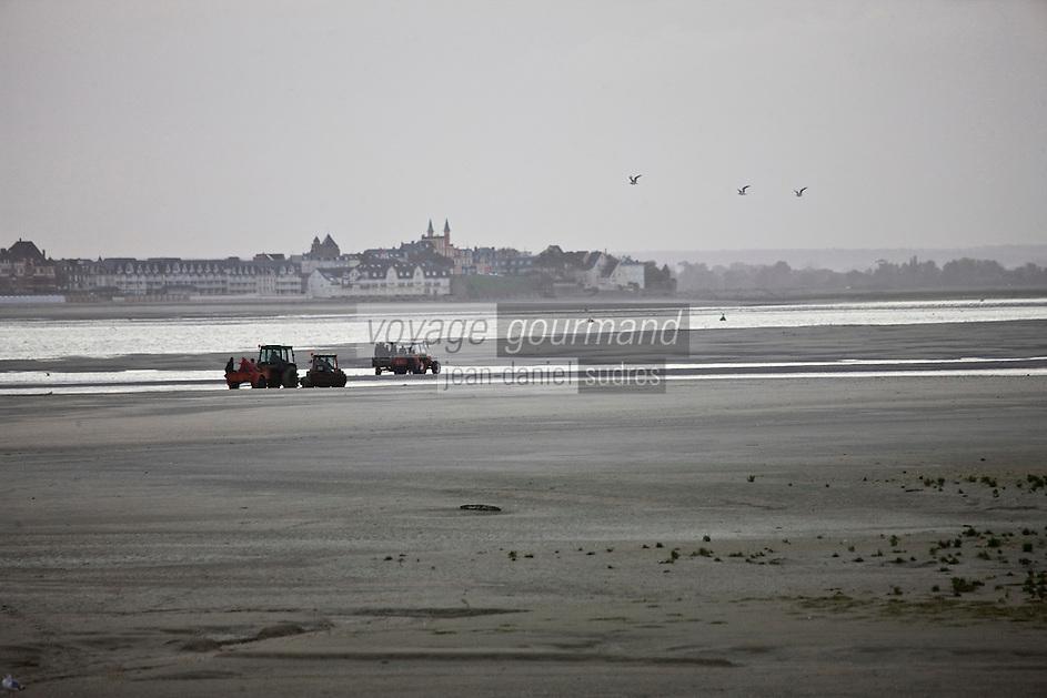 Europe/France/Picardie/80/Somme/Baie de Somme/Le Hourdel: ramassge des coques de La Baie de Somme, à la Pointe du Hourdel en fond Le Crotoy