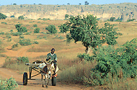 Mali. Province of Mopti. Dogon land. View on the Bandagiara cliff.  A man rides his cart on a dirt road. He is alone with his donkey.    © 2003 Didier Ruef