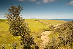 Image Ref: CA961<br /> Location: Bushrangers Bay Track<br /> Date of Shot: 28.09.19