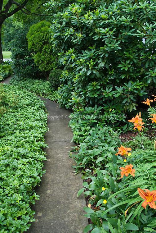 Shade garden path walkway amid pachysandra, hemerocallis, daylilies, convallaria lily of the valley, groundcovers, evergreens, shrubs, trees