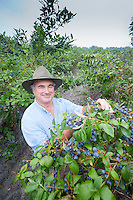 Blueberry Farmer, Vincentown, New Jersey