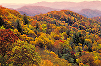 Fall foliage lends a patchwork appearance to the hills and valleys of the Blue Ridge mountains. fall foliage, autumn leaves, trees, color, landscape. Fall season,mountains. North Carolina, Along the Blue Ridge Parkway.