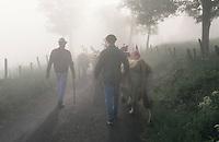 Europe/France/Auvergne/12/Aveyron/Env. de Saint-Come d'Olt: Passage du troupeau dans la brume lors de la transhumance en Aubrac
