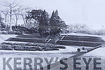 An old photo of the two trees that were in the sunken garden in Muckross House