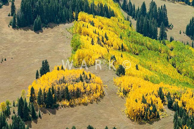 Colorado high country Aspen in fall