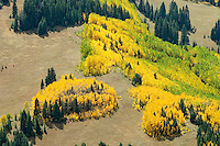 Colorado high country Aspen in fall