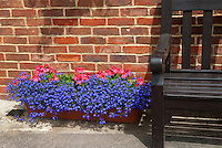 Pelargonium, lobelia erinus in runner box container pot next to brick house wall and garden bench