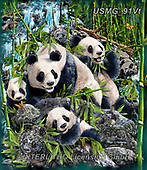 Steven-Michael, REALISTIC ANIMALS, REALISTISCHE TIERE, ANIMALES REALISTICOS, zeich1, paintings+++++,USMG91VT,#a#, EVERYDAY,panda,pandas