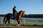 November 3, 2020: Sittin On Go, trained by trainer Dale L. Romans, exercises in preparation for the Breeders' Cup Juvenile at Keeneland Racetrack in Lexington, Kentucky on November 3, 2020. Alex Evers/Eclipse Sportswire/Breeders Cup