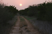 Ranch Road at sunset, Rio Grande Valley,Texas, USA