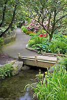 Bridge and path with bloominmg rhododendrons at Crystal Gardens. Portland, Oregon