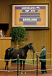 September 15, 2015: Hip 270 Bernardini - First Passage filly consigned by Bluegrass Thoroughbred Services.   Candice Chavez/ESW/CSM