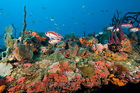 Reef and sponges, St. Kitts, Caribbean.