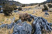 Rocks of karst landscape atop of Takaka Hill, Nelson Region, Golden Bay, South Island, New Zealand
