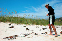 Man feeding an endangered Allen's Cay Iguana (Cyclura cychlura inornata) on Allen's Cay, Exuma Islands, Bahamas