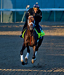 LOUISVILLE, KY - APRIL 30: Magnum Moon, trained by Todd Pletcher, exercises in preparation for the Kentucky Derby at Churchill Downs on April 30, 2018 in Louisville, Kentucky. (Photo by John Voorhees/Eclipse Sportswire/Getty Images)