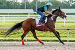 January 24, 2020: Bodeexpress gallops as horses prepare for the Pegasus World Cup Invitational at Gulfstream Park Race Track in Hallandale Beach, Florida. Scott Serio/Eclipse Sportswire/CSM