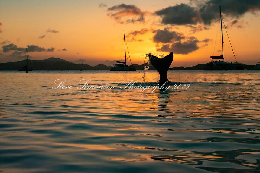 Mermaid in the sunset<br /> Honeymoon Beach<br /> Simonsen Sunset Stream<br /> St. John<br /> Virgin Islands