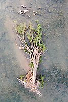 Fallen Forests of the Mekong [2020]