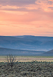 Pinks and purples color the sky during the soft hazy sunrise in Southeast Oregon looking toward the distant hills.
