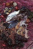 Europe/Italie/ Sicile/ Aci Trezza:Poissons ,coquillages et  crustacés  Port de Pêche-