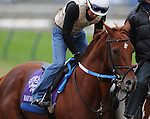 3 November 2010:  Haynesfield, trained by Steven M. Asmussen and to be ridden by jockey Ramon Dominguez, works out for the 2010 Breeders Cup at Churchill Downs in Louisville, Kentucky.(Scott Serio/Eclipse Sportswire)