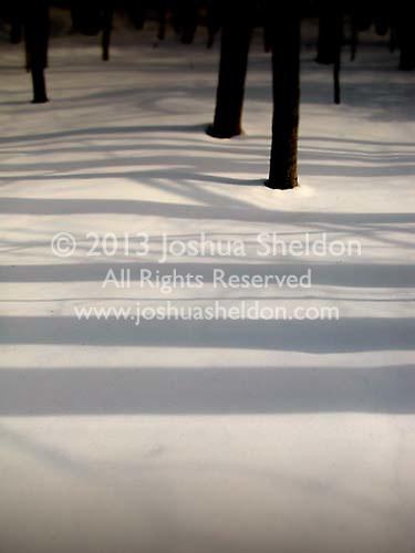 Shadows of tree trunks across snow<br />