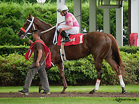 Srumdiddlyumptious before The Dashing Beauty Stakes  at Delaware Park on 6/27/13