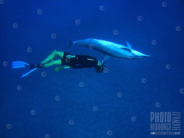 Snorkeler and Spinner Dolphin; Stenella longirostris