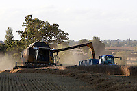 Photo: Richard Lane/Richard Lane Photography. Grain harvest in Clifton, Oxfordshire. New Holland  combine harvesters cuts winter wheat unloads into a tractor and trailer. 20/08/2009.
